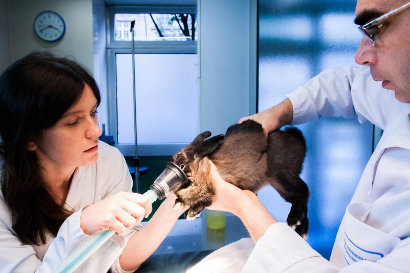 Dans le cabinet d'un vétérinaire